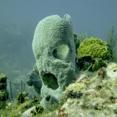 French Reef